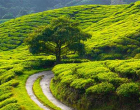 Coorg Holiday Packages