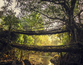 Living Root Bridges (Meghalaya)