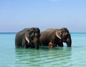 Port Blair Havelock Neil Island Package